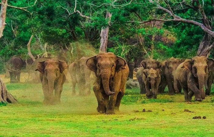 Sri Lanka-Boland-Travel 1